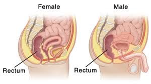 Rectum Insertion in Female & Male